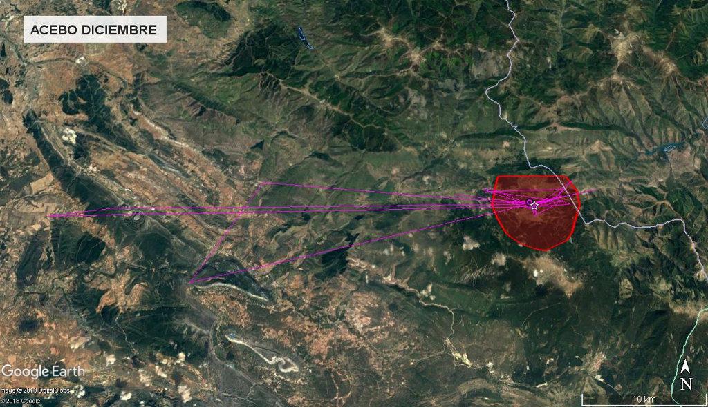 Mapa 14: Movimientos de Acebo durante el mes de diciembre. Se muestra el área vital en rojo (Kernel 50%).