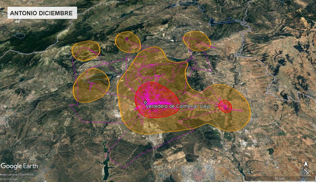 Mapa 16: Movimientos de Antonio durante el mes de diciembre. Se muestra el área vital en rojo (Kernel 50%) y el área de campeo (Kernel 95%).