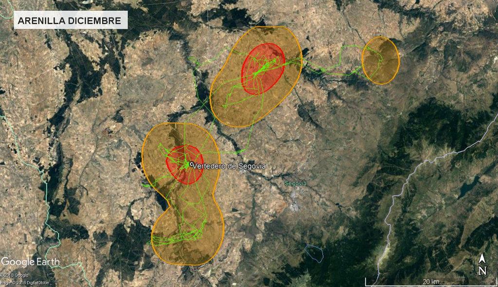 Mapa 17: Movimientos de Arenilla durante el mes de diciembre. Se muestra el área vital en rojo (Kernel 50%) y el área de campeo (Kernel 95%).