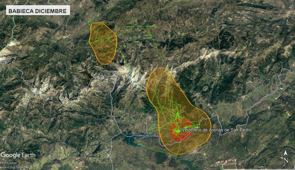 Mapa 19: Movimientos de Babieca durante el mes de diciembre. Se muestra el área vital en rojo (Kernel 50%) y el área de campeo (Kernel 95%).