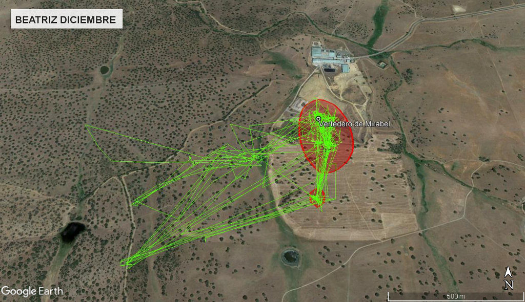 Mapa 20: Movimientos de Beatriz durante el mes de diciembre. Se muestra el área vital en rojo (Kernel 50%).