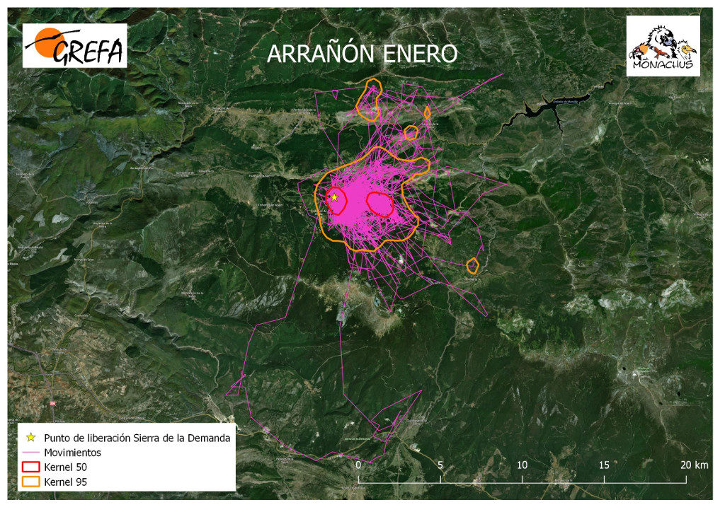 Mapa 1. Movimientos (morado) y área vital (rojo) y de campeo (naranja) de Arrañón durante el mes de enero.