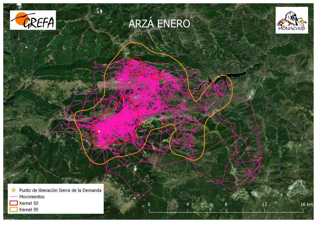 Mapa 2. Movimientos (morado) y área vital (rojo) y de campeo (naranja) de Arzá durante el mes de enero.