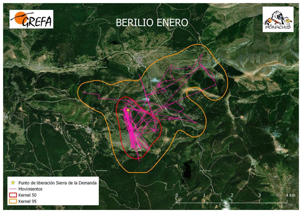 Mapa 4. Movimientos (morado) y área vital (rojo) y de campeo (naranja) de Berilio durante el mes de enero.