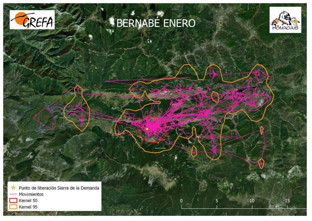 Mapa 5. Movimientos (morado) y área vital (rojo) y de campeo (naranja) de Bernabé durante el mes de enero.