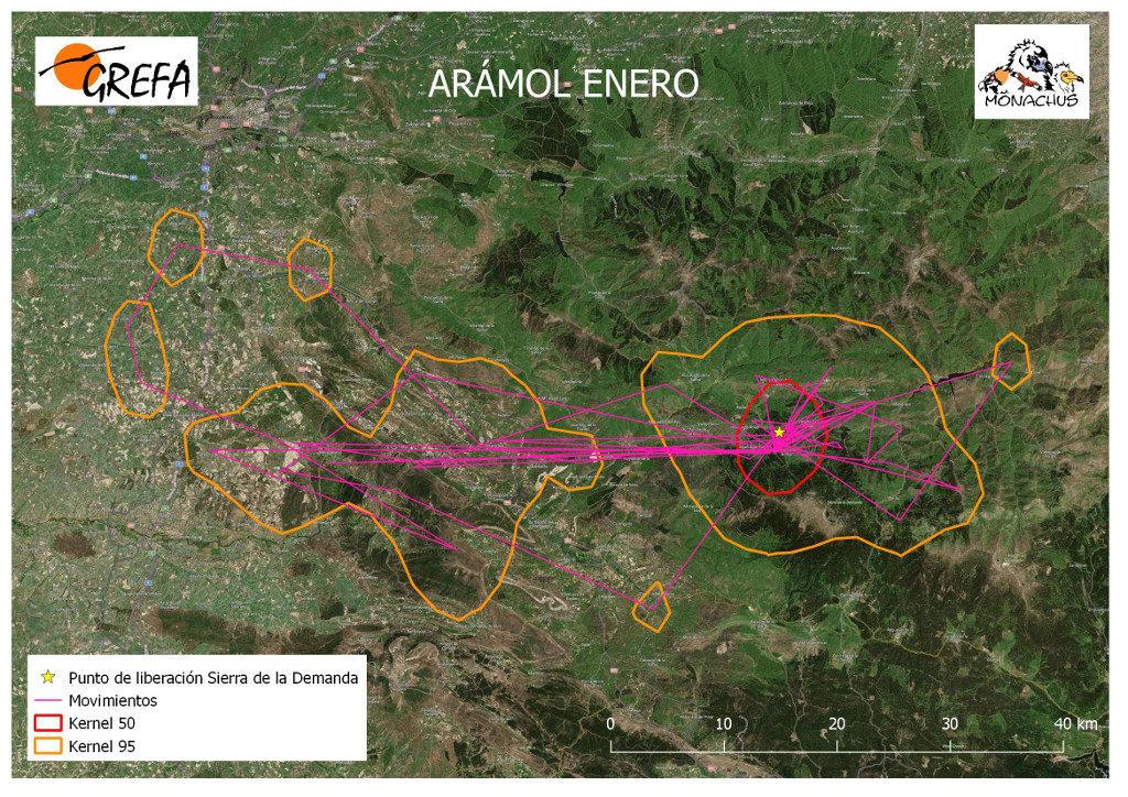 Mapa 6. Movimientos (morado) y área vital (rojo) y de campeo (naranja) de Arámol durante el mes de enero.