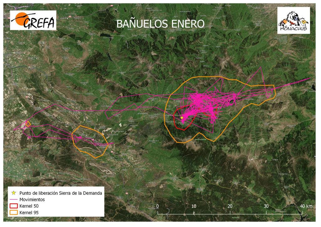 Mapa 7. Movimientos (morado) y área vital (rojo) y de campeo (naranja) de Bañuelos durante el mes de enero.