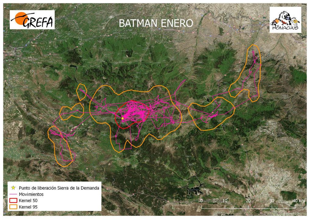 Mapa 8. Movimientos (morado) y área vital (rojo) y de campeo (naranja) de Batman durante el mes de enero.