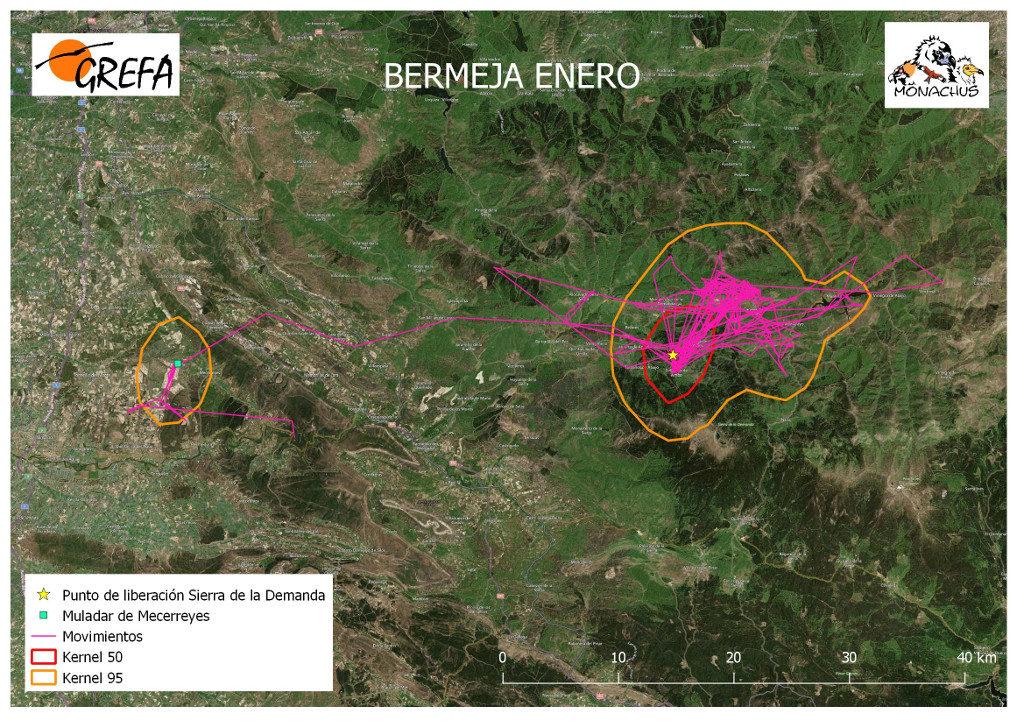 Mapa 10. Movimientos (morado) y área vital (rojo) y de campeo (naranja) de Bermeja durante el mes de enero.