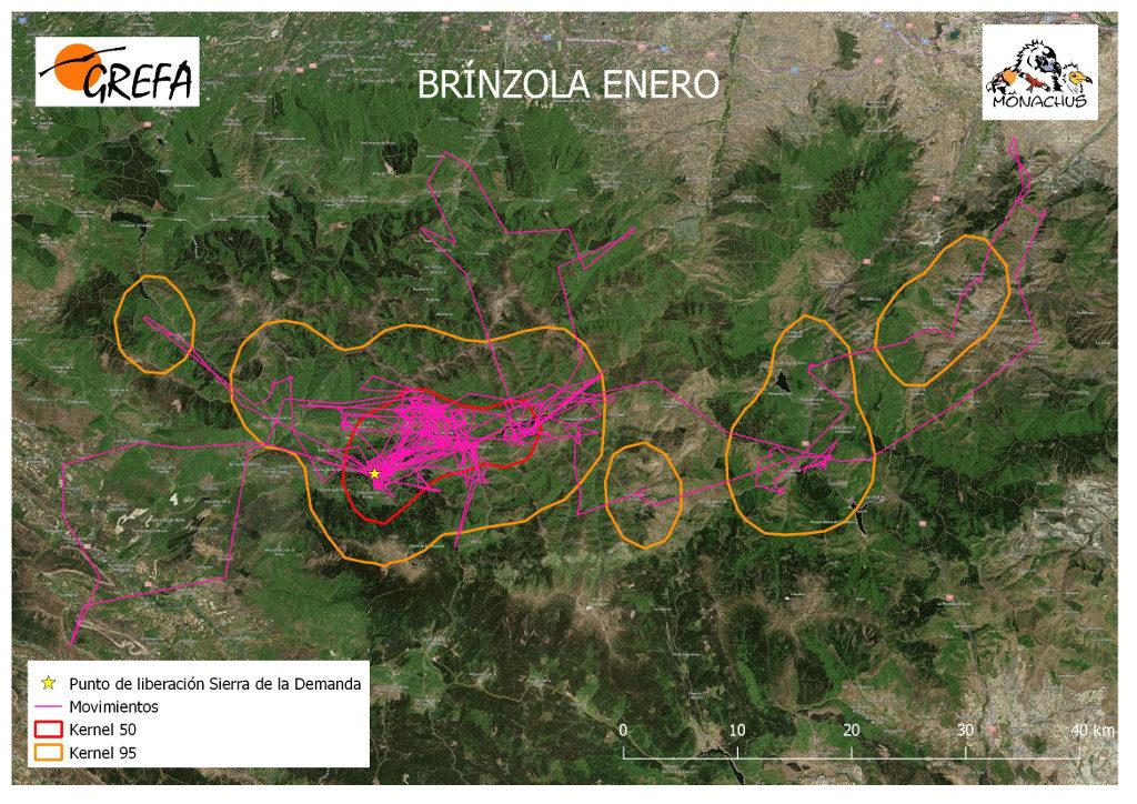 Mapa 12. Movimientos (morado) y área vital (rojo) y de campeo (naranja) de Brínzola durante el mes de enero.