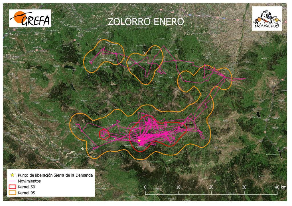Mapa 13. Movimientos (morado) y área vital (rojo) y de campeo (naranja) de Zolorro durante el mes de enero.