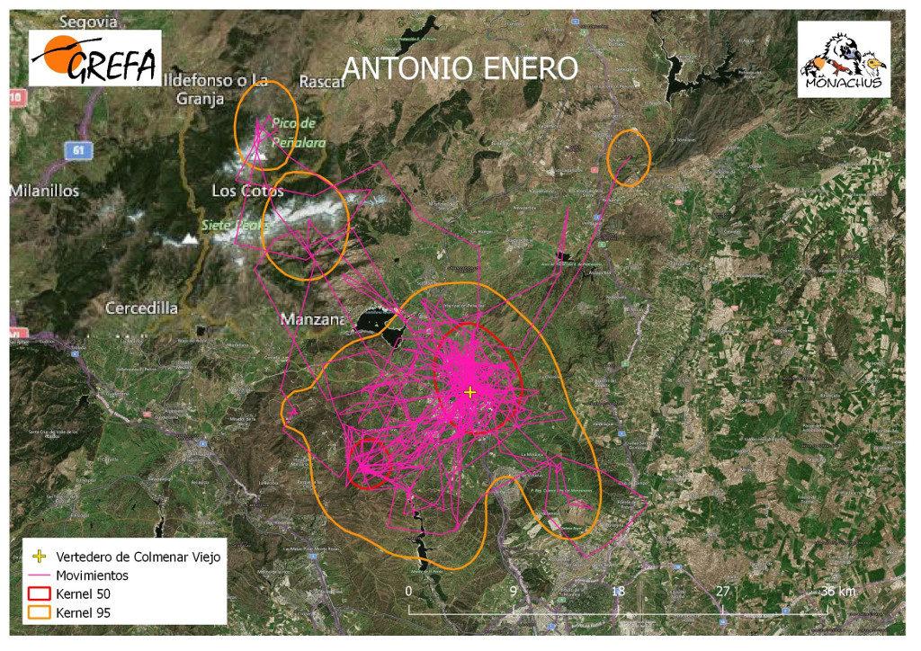 Mapa 14. Movimientos (morado) y área vital (rojo) y de campeo (naranja) de Antonio durante el mes de enero.
