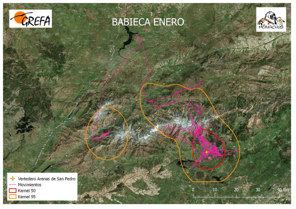 Mapa 17. Movimientos (morado) y área vital (rojo) y de campeo (naranja) de Babieca durante el mes de enero.