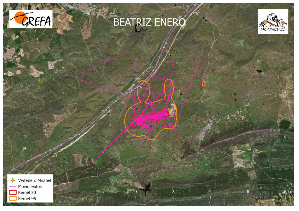 Mapa 18. Movimientos (morado) y área vital (rojo) y de campeo (naranja) de Beatriz durante el mes de enero.