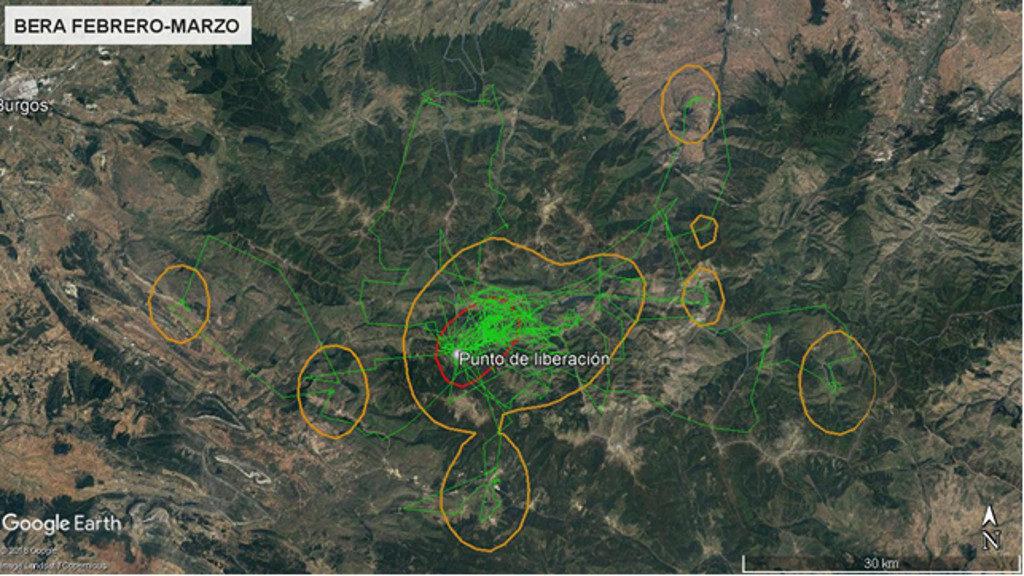 Mapa 1: Movimientos de Bera durante los meses de febrero y marzo. La línea amarilla delimita el área de campeo (Kernel 95%) y la roja el área vital (Kernel 50%).
