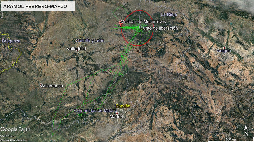 Mapa 4: Movimientos de Arámol durante los meses de febrero y marzo. La línea amarilla delimita el área de campeo (Kernel 95%) y la roja el área vital (Kernel 50%).