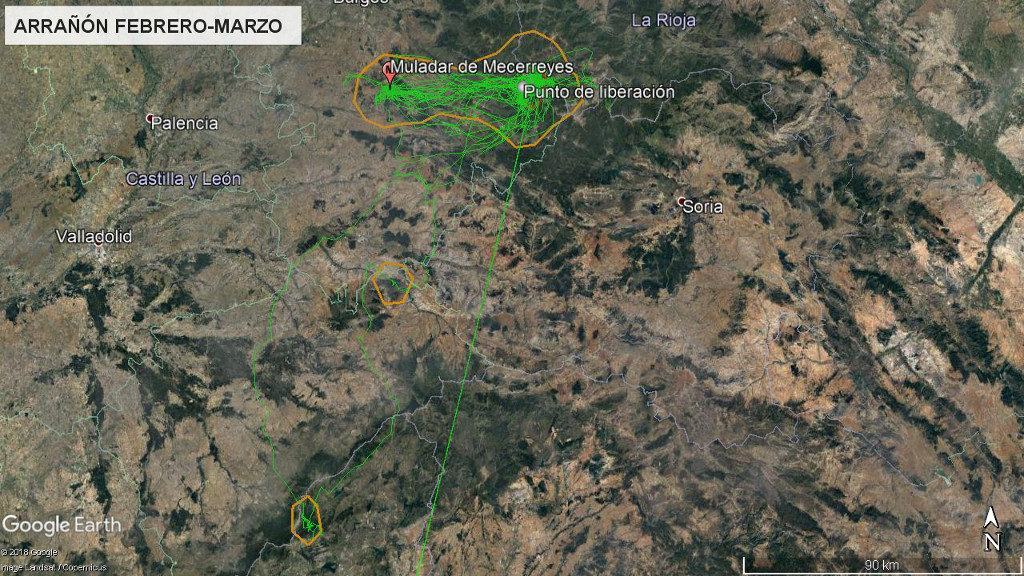 Mapa 6: Movimientos de Arrañón durante los meses de febrero y marzo. La línea amarilla delimita el área de campeo (Kernel 95%) y la roja el área vital (Kernel 50%).