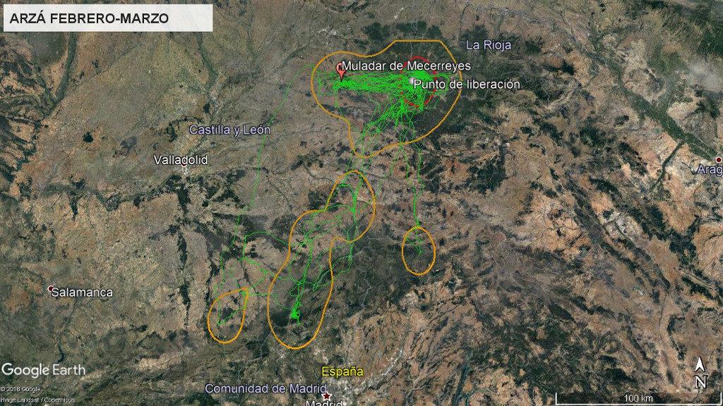 Mapa 7: Movimientos de Arzá durante los meses de febrero y marzo. La línea amarilla delimita el área de campeo (Kernel 95%) y la roja el área vital (Kernel 50%).