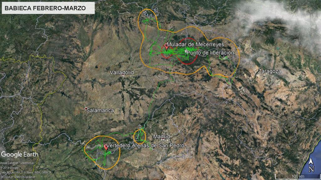 Mapa 9: Movimientos de Babieca durante los meses de febrero y marzo. La línea amarilla delimita el área de campeo (Kernel 95%) y la roja el área vital (Kernel 50%).