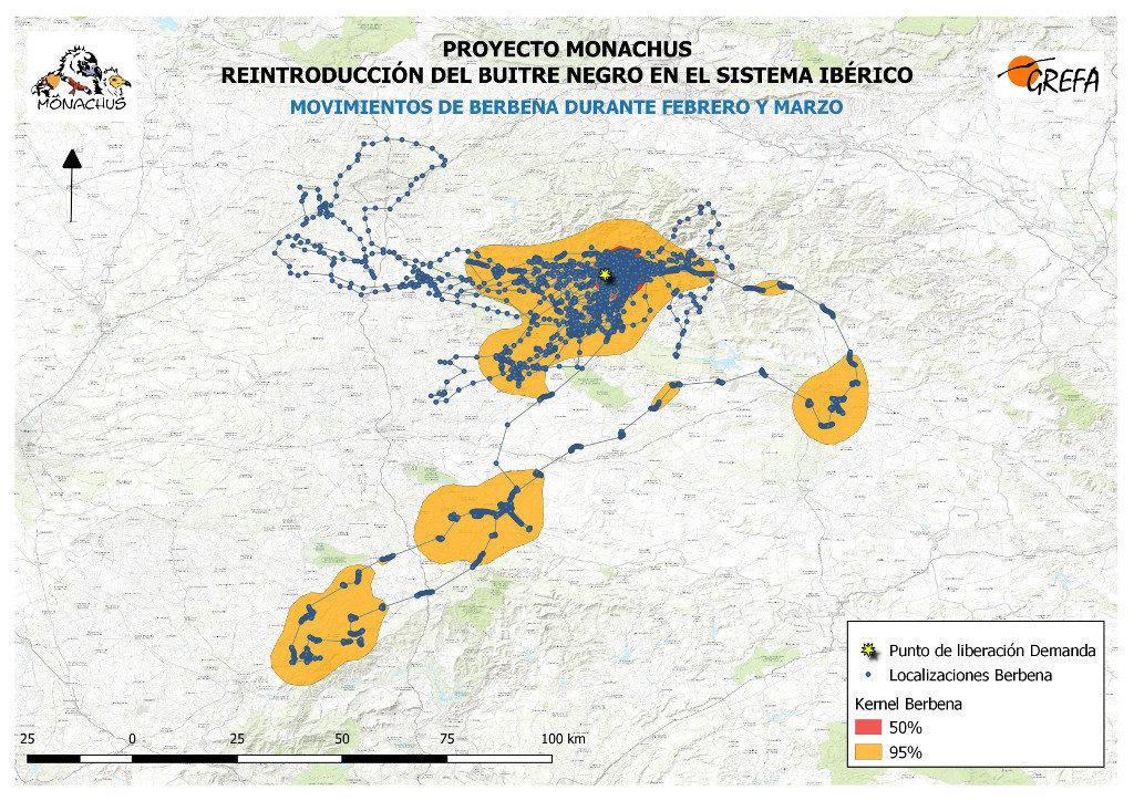 Mapa 10: Movimientos de Berbena durante los meses de febrero y marzo. El área amarilla delimita el área de campeo (Kernel 95%) y la roja el área vital (Kernel 50%).