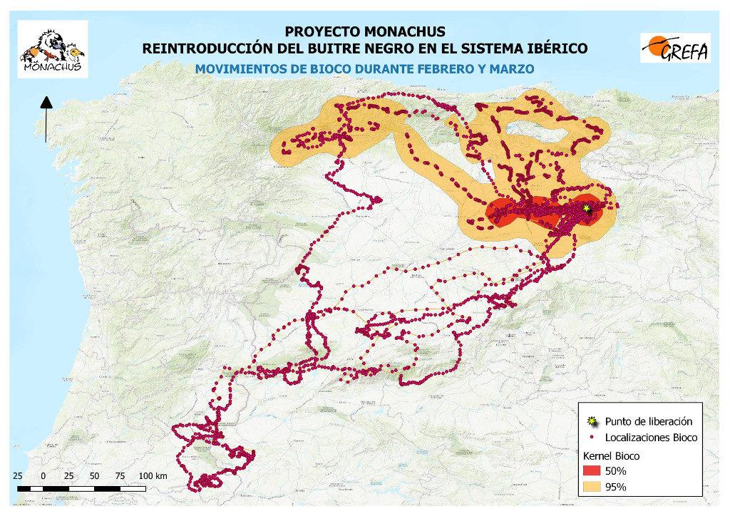 Mapa 12: Movimientos de Bioco durante los meses de febrero y marzo. El área amarilla delimita el área de campeo (Kernel 95%) y la roja el área vital (Kernel 50%).