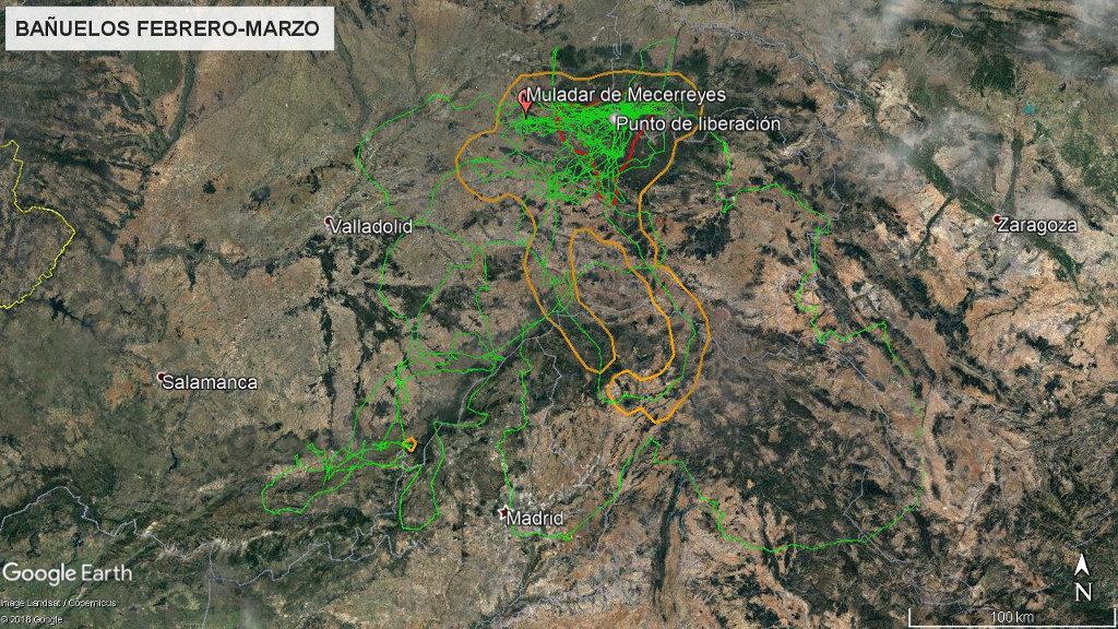 Mapa 13: Movimientos de Bañuelos durante los meses de febrero y marzo. La línea amarilla delimita el área de campeo (Kernel 95%) y la roja el área vital (Kernel 50%).