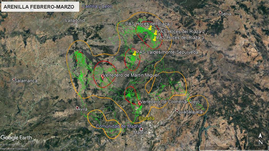 Mapa 18: Movimientos de Arenilla durante los meses de febrero y marzo. La línea amarilla delimita el área de campeo (Kernel 95%) y la roja el área vital (Kernel 50%).