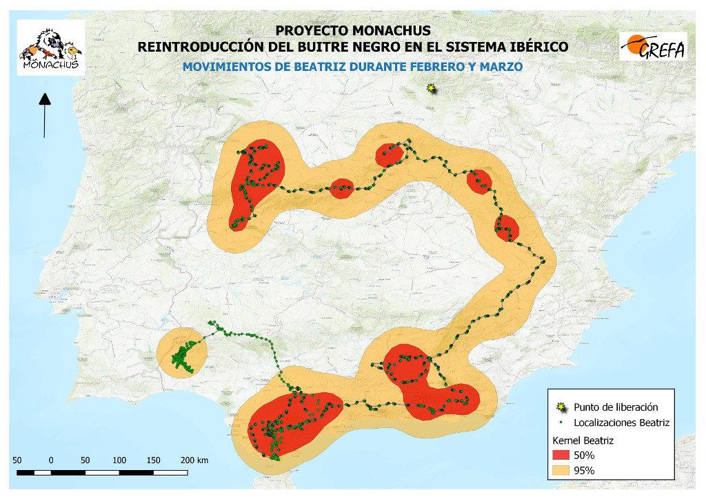 Mapa 20: Movimientos de Beatriz durante los meses de febrero y marzo. El área amarilla delimita el área de campeo (Kernel 95%) y la roja el área vital (Kernel 50%).