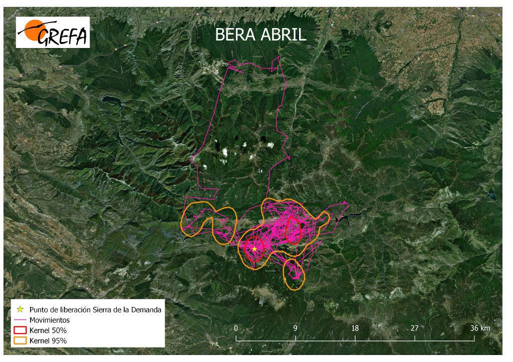 Mapa 1. Movimientos de Bera durante el mes de abril. La línea amarilla delimita el área de campeo (Kernel 95%) y la roja el área vital (Kernel 50%).