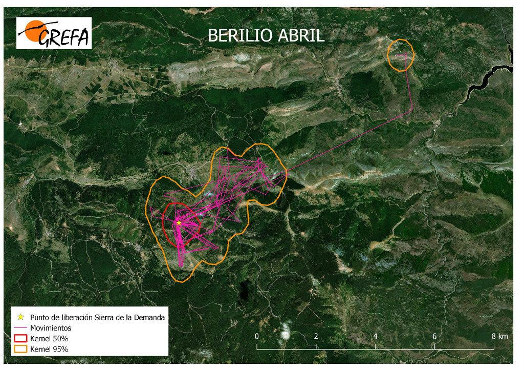 Mapa 2. Movimientos de Berilio durante el mes de abril. La línea amarilla delimita el área de campeo (Kernel 95%) y la roja el área vital (Kernel 50%).