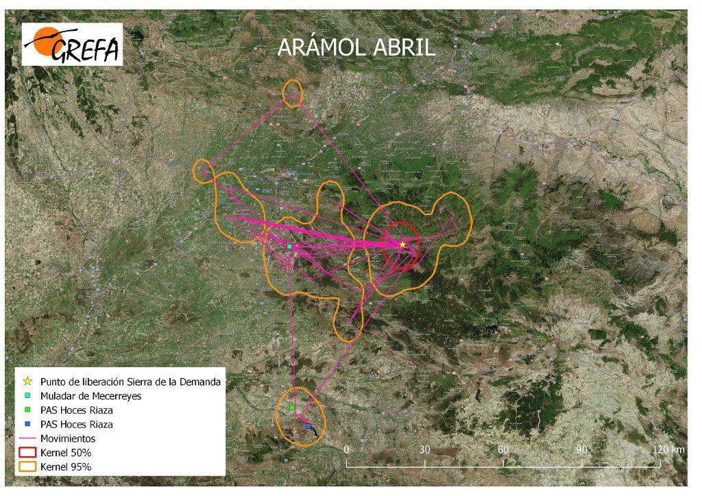 Mapa 3. Movimientos de Arámol durante el mes de abril. La línea amarilla delimita el área de campeo (Kernel 95%) y la roja el área vital (Kernel 50%).
