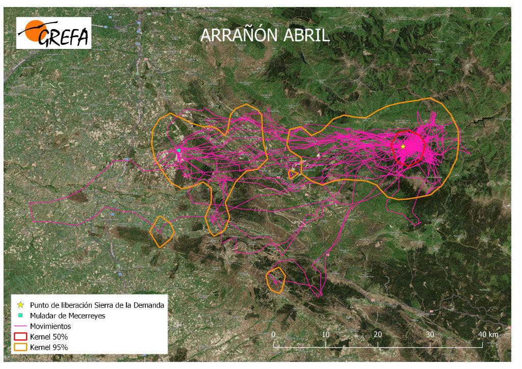 Mapa 4. Movimientos de Arrañón durante el mes de abril. La línea amarilla delimita el área de campeo (Kernel 95%) y la roja el área vital (Kernel 50%).