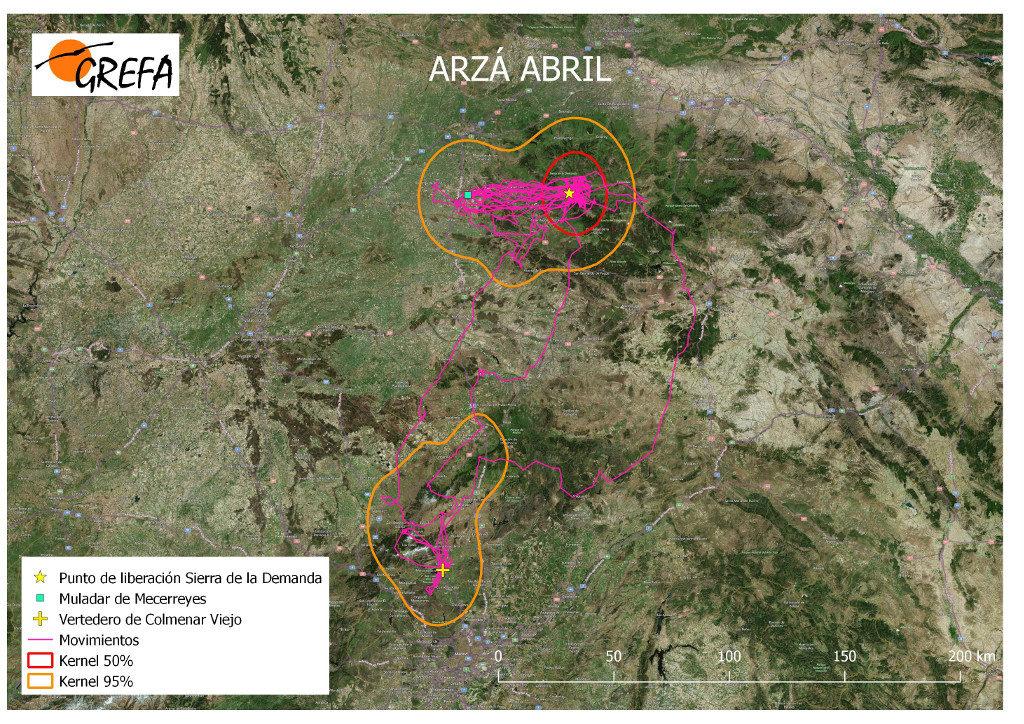 Mapa 5. Movimientos de Arzá durante el mes de abril. La línea amarilla delimita el área de campeo (Kernel 95%) y la roja el área vital (Kernel 50%).