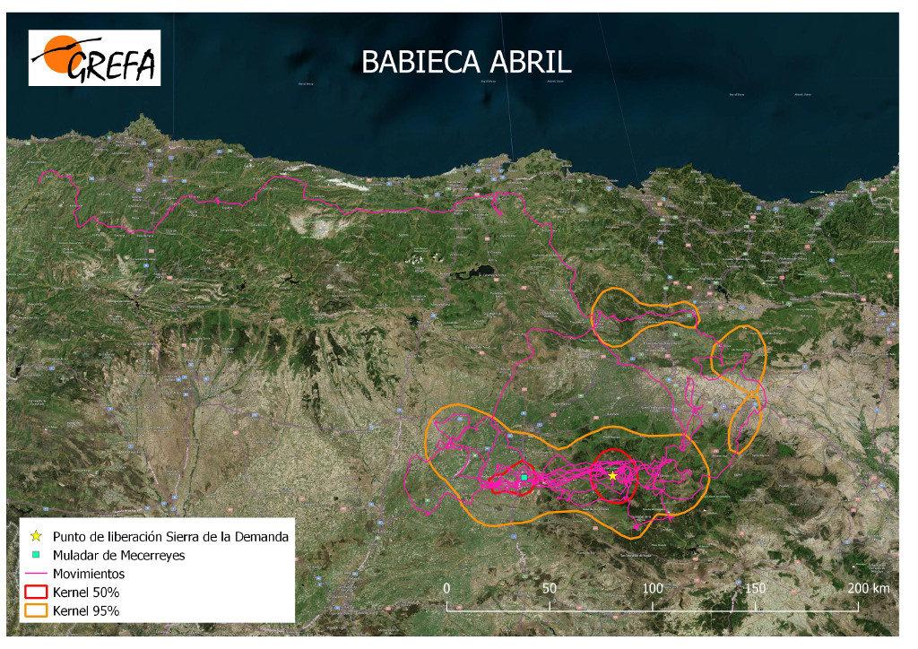 Mapa 6. Movimientos de Babieca durante el mes de abril. La línea amarilla delimita el área de campeo (Kernel 95%) y la roja el área vital (Kernel 50%).