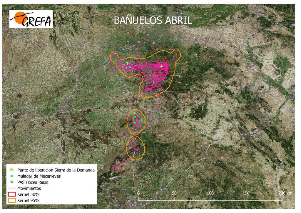 Mapa 7. Movimientos de Bañuelos durante el mes de abril. La línea amarilla delimita el área de campeo (Kernel 95%) y la roja el área vital (Kernel 50%).
