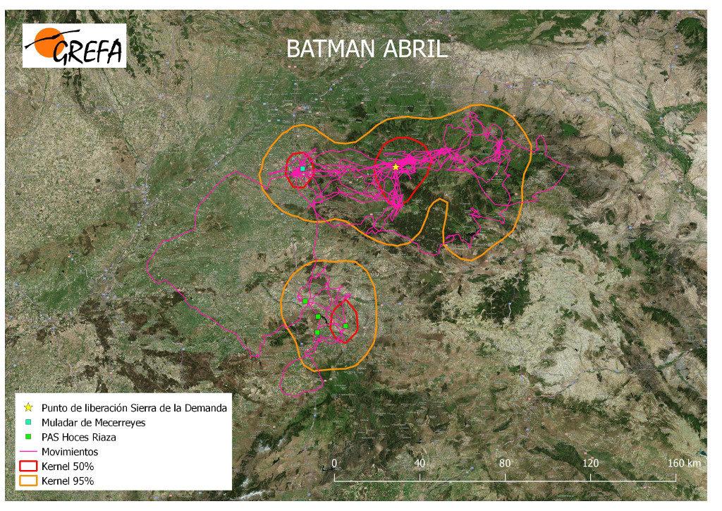 Mapa 8. Movimientos de Batman durante el mes de abril. La línea amarilla delimita el área de campeo (Kernel 95%) y la roja el área vital (Kernel 50%).