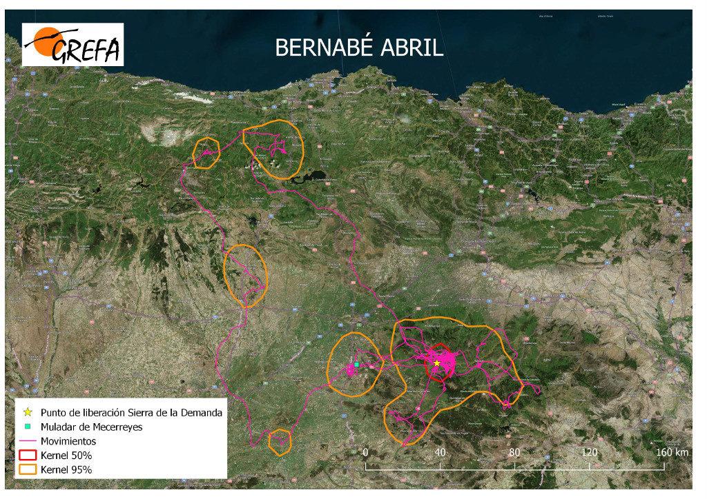 Mapa 10. Movimientos de Bermeja durante el mes de abril. La línea amarilla delimita el área de campeo (Kernel 95%) y la roja el área vital (Kernel 50%).