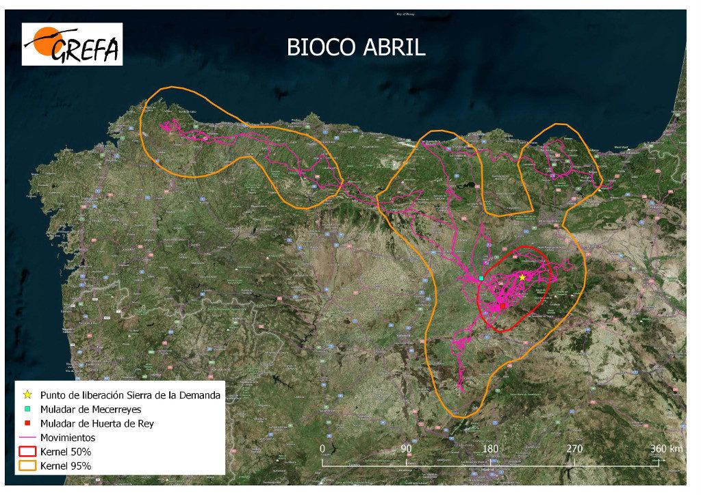 Mapa 12. Movimientos de Bioco durante el mes de abril. La línea amarilla delimita el área de campeo (Kernel 95%) y la roja el área vital (Kernel 50%).