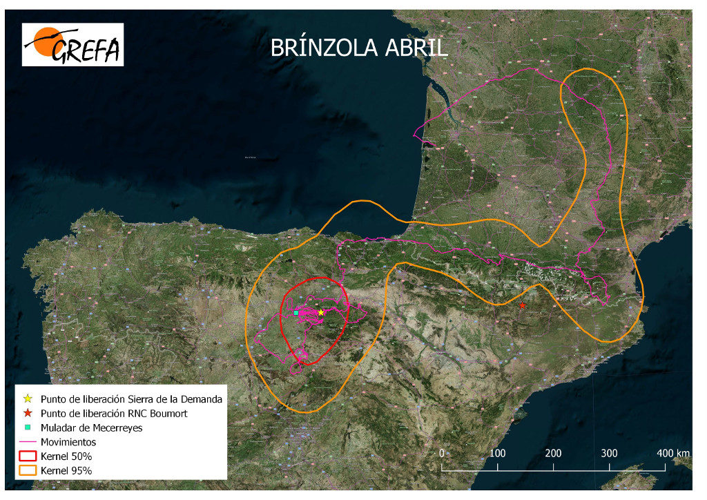Mapa 13. Movimientos de Brínzola durante el mes de abril. La línea amarilla delimita el área de campeo (Kernel 95%) y la roja el área vital (Kernel 50%).