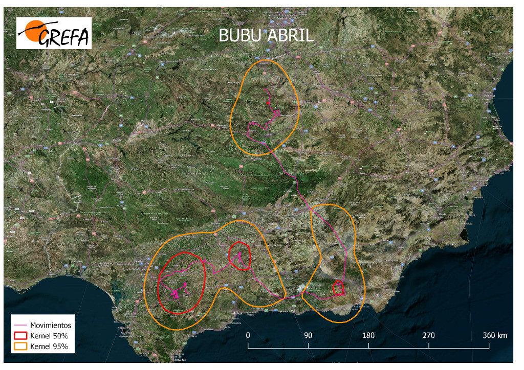 Mapa 14. Movimientos de Bubu durante el mes de abril. La línea amarilla delimita el área de campeo (Kernel 95%) y la roja el área vital (Kernel 50%).