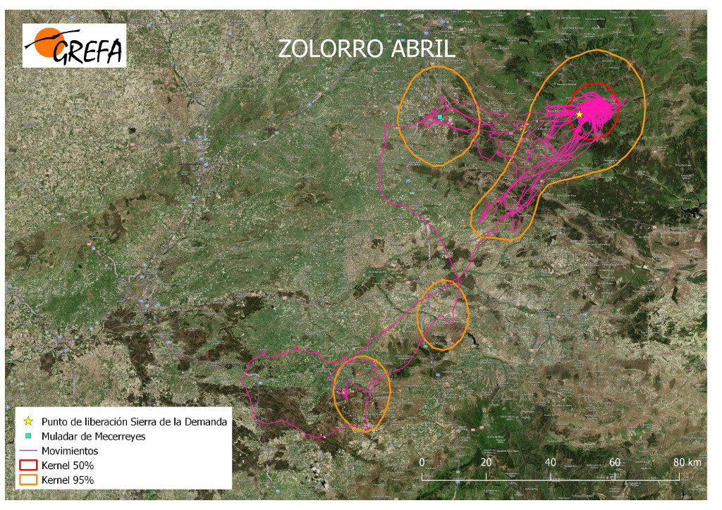 Mapa 15. Movimientos de Zolorro durante el mes de abril. La línea amarilla delimita el área de campeo (Kernel 95%) y la roja el área vital (Kernel 50%).