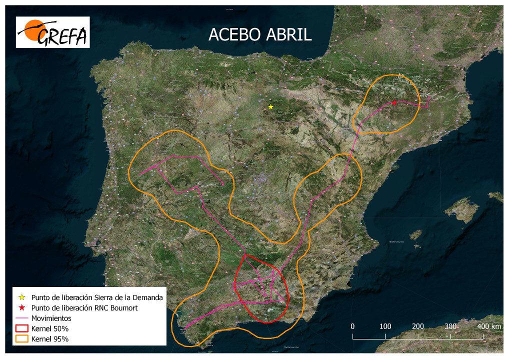 3. Movimientos dispersivos a larga distancia fuera del núcleo de liberación de buitres que estaban fijados: Acebo (mapa 16).