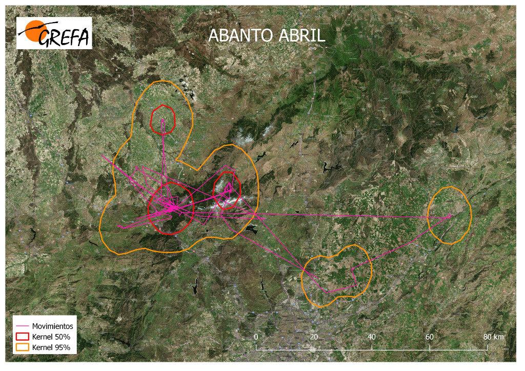 Mapa 17. Movimientos de Abanto durante el mes de abril. La línea amarilla delimita el área de campeo (Kernel 95%) y la roja el área vital (Kernel 50%).