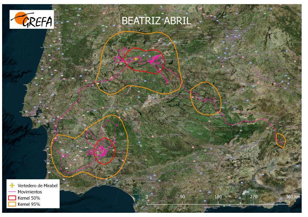 Mapa 20. Movimientos de Beatriz durante el mes de abril. La línea amarilla delimita el área de campeo (Kernel 95%) y la roja el área vital (Kernel 50%).