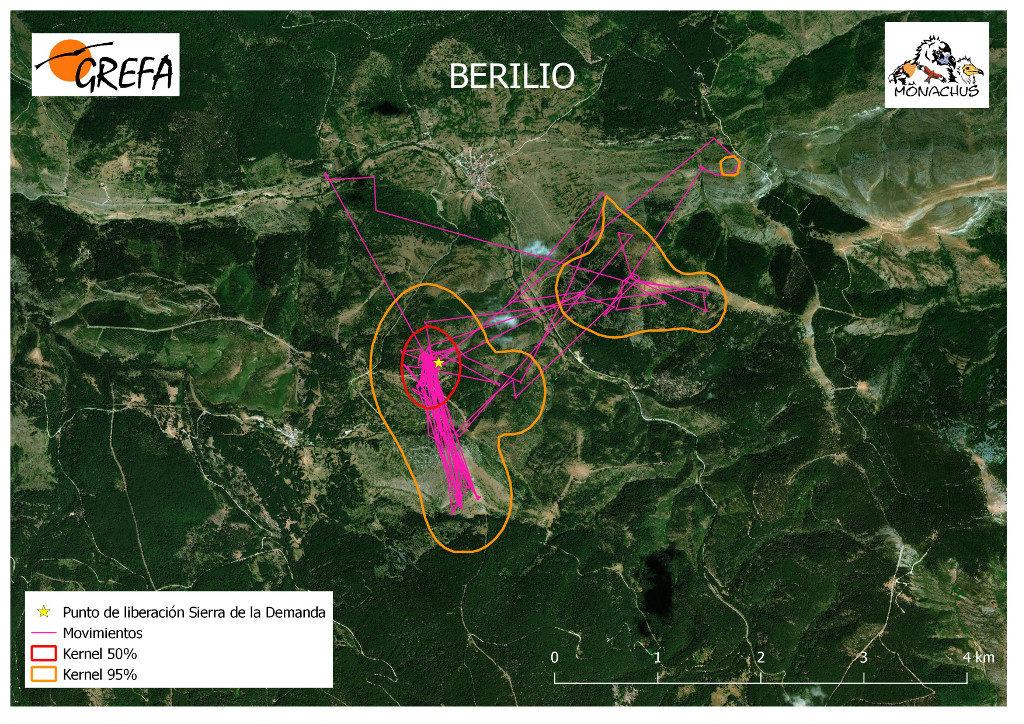 Mapa 2. Movimientos de Berilio durante el mes de junio. La línea amarilla delimita el área de campeo (Kernel 95%) y la roja el área vital (Kernel 50%).