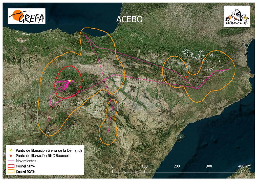Mapa 3. Movimientos de Acebo durante el mes de junio. La línea amarilla delimita el área de campeo (Kernel 95%) y la roja el área vital (Kernel 50%).
