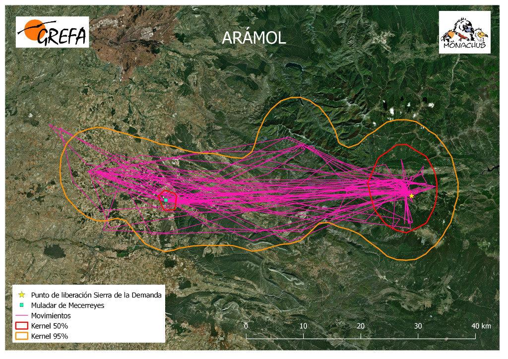 Mapa 4. Movimientos de Arámol durante el mes de junio. La línea amarilla delimita el área de campeo (Kernel 95%) y la roja el área vital (Kernel 50%).