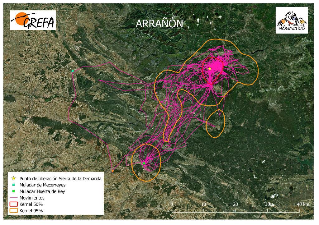Mapa 5. Movimientos de Arrañón durante el mes de junio. La línea amarilla delimita el área de campeo (Kernel 95%) y la roja el área vital (Kernel 50%).