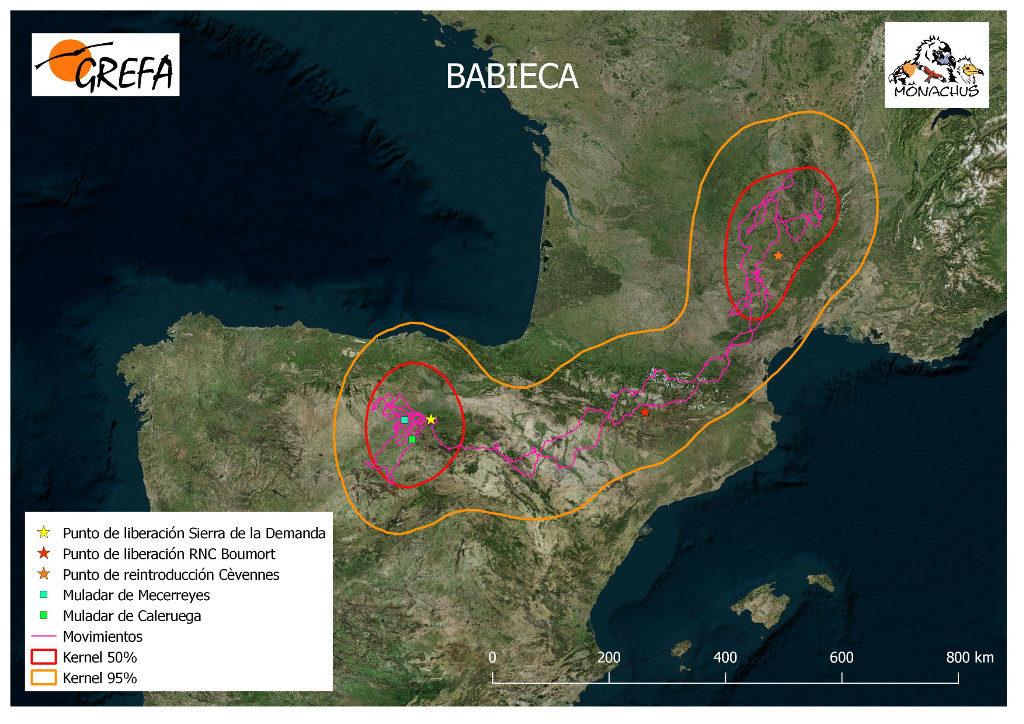 Mapa 6. Movimientos de Babieca durante el mes de junio. La línea amarilla delimita el área de campeo (Kernel 95%) y la roja el área vital (Kernel 50%).