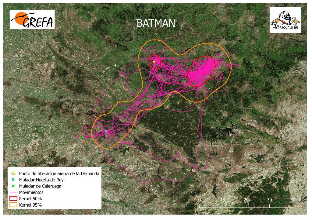 Mapa 8. Movimientos de Batman durante el mes de junio. La línea amarilla delimita el área de campeo (Kernel 95%) y la roja el área vital (Kernel 50%).